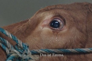 Ετοίμαζαν αγελάδα για σφαγή και τότε συνέβη αυτό! Δείτε το συγκλονιστικό βίντεο!