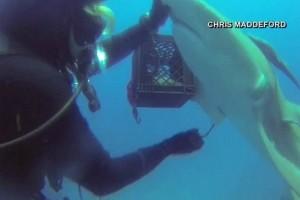 To video που κάνει τον γύρο του διαδικτύου: Δύτης σώζει την ζωή... καρχαρία!