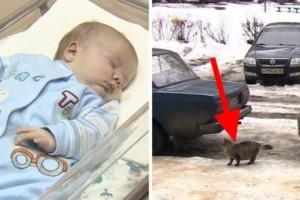 Παράτησαν το νεογέννητο μωρό τους στην παγωνιά, για να πεθάνει από το κρύο. Προσέξτε όμως τώρα τι θα κάνει αυτή η γάτα!