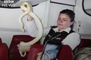 Σοκ στον αέρα: Εμφανίστηκε φίδι μέσα σε αεροπλάνο! (video)