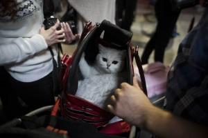 Η φωτογραφία της ημέρας: Μια γάτα τοποθετείται στην τσάντα μεταφοράς κατά τη διάρκεια του World Cat Show!