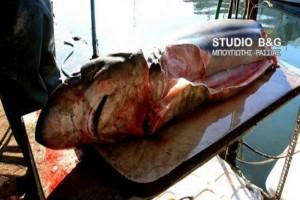 Ψάρεψαν… καρχαρία στην Αργολίδα! Δείτε το τρομερό βίντεο!