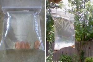 Μύγες τέλος: Κάντε αυτό το απίστευτο και πανεύκολο κόλπο και δεν θα σε ενοχλήσουν ξανά! (Photos)