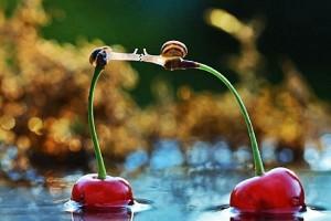 Η φωτογραφία της ημέρας: Δύο σαλιγκάρια ερωτευμένα!