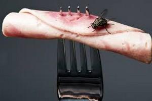 Δεν είναι τόσο αθώο όσο πιστεύετε. Τι συμβαίνει όταν μία μύγα κάθεται πάνω στο φαγητό μας;