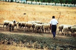 Φρίκη στην Ηλεία: Πασχαλινή εκδίκηση με εικόνες που τρομοκρατούν! Ο κτηνοτρόφος ξύπνησε και έπαθε σοκ!