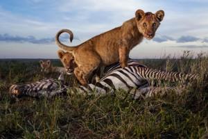 Η φωτογραφία της ημέρας: Η μάχη στο ζωικό βασίλειο!