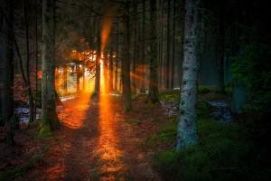 Η φωτογραφία της ημέρας: Ένα μαγευτικό ηλιοβασίλεμα μέσα από δάσος!