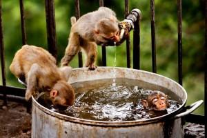 Η φωτογραφία της ημέρας: Η ζωή στο ζωικό βασίλειο!