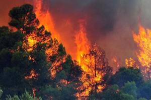 Ρόδος: Φωτιά σε δασική έκταση