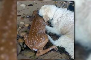 Σκύλος σώζει ελαφάκι που πνίγεται σε λίμνη: Το πιο γενναίο video που θα δείτε!