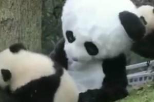 Η πιο γλυκιά δουλειά! Δεν φαντάζεστε τι κάνουν οι εργαζόμενοι αυτού του ζωολογικού κήπου για να μην τρομάξουν τα ζώα (video)