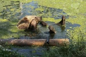 Η φωτογραφία της ημέρας: Η αξιολάτρευτη αρκούδα που απολαμβάνει το μπάνιο της!