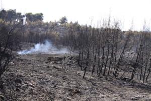 Υπάρχει τρόπος να ξαναζωντανέψουν τα δάση που κάηκαν! Δείτε στο video το πώς!