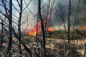Έδιωξαν κακήν κακώς το συνεργείο του ΣΚΑΪ από το μέτωπο της φωτιάς στην Αμαλιάδα: Αγανακτισμένος πυροσβέστης φωνάζει στον κάμεραμαν! (video)