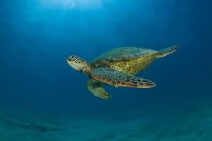 Αυτοί δεν είναι άνθρωποι: Αποκεφάλισαν χελώνα καρέτα καρέτα στην Κρήτη - Ανατριχιαστικό θέαμα! (σκληρές εικόνες)