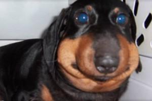 13 πρησμένα σκυλάκια που τόλμησαν να τα βάλλουν με τις... μέλισσες! (Photos)