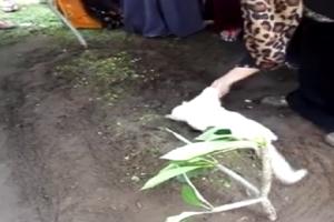 Συγκινητικό βίντεο: Γάτα αρνείται να εγκαταλείψει το νεκρό αφεντικό της!