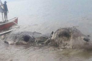Κανείς δεν ξέρει τι είναι αυτό το ανατριχιαστικό πλάσμα που ξέβρασε η θάλασσα στις Φιλιππίνες! (video)