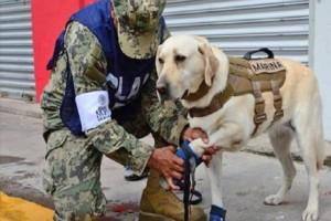 Αξιολάτρευτο: Αυτό είναι το σκυλί που έχει σώσει πάνω από 52 ανθρώπους! (Video)