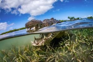 Η φωτογραφία της ημέρας: Στα σαγόνια ενός κροκόδειλου!