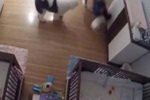 Απίστευτο: 9χρονος σώζει τον 11 μηνών αδελφό του από πτώση! (Video)