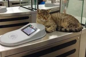 Ένας γάτος στο μετρό στο Μοναστηράκι  μόνο για χάδια! (photo)