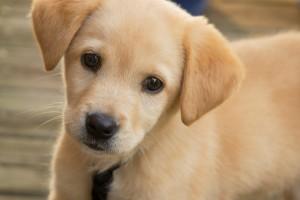 8 σημάδια που σας προειδοποιούν ότι ο σκύλος σας πλησιάζει στο τέλος του!