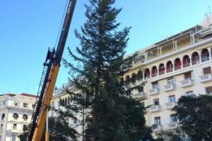 Στήθηκε το χριστουγεννιάτικο δέντρο στην Αριστοτέλους - Το πανύψηλο φυσικό έλατο (Photos+video)