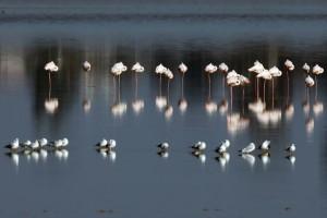 Η φωτογραφία της ημέρας: Ροζ φλαμίνγκο στην Αλυκή Λάρνακας!