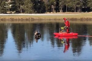 Συγκλονιστικό βίντεο: Η απίστευτη διάσωση ενός ελαφιού!
