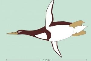 Απίστευτο: Ανακαλύφθηκε απολίθωμα γιγάντιου πιγκουίνου με ύψος ανθρώπου! (Photo)