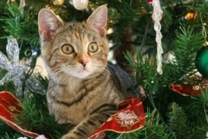Ότι πιο αστείο! Όταν το κατοικίδιο πρέπει να... συμβιβαστεί με τα Χριστούγεννα!