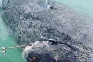 Απίστευτο: Ψάρεψαν το γηραιότερο πλάσμα στη Γη- Ο καρχαρίας που γεννήθηκε το... 1505! (Photos)