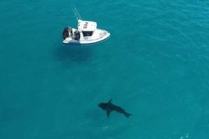 Απίστευτο βίντεο: Τεράστιος λευκός καρχαρίας παραμόνευε σε πολυσύχναστη παραλία!
