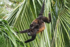 Η φωτογραφία της ημέρας: Η μάχη της επιβίωσης στην ζούγκλα!