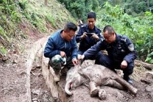 Απίστευτη διάσωση ενός ελέφαντα: Είχε πέσει από ύψος 60 μέτρων!