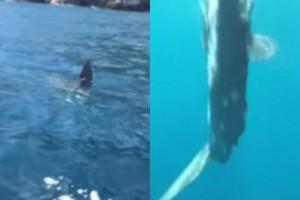 Ζάκυνθος: Κάτοικοι ήρθαν αντιμέτωποι με ένα γιγάντιο ψάρι του Ατλαντικού! (Video)