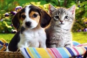 Σας ενδιαφέρει: Δείτε τι προβλέπει το νέο σχέδιο νόμου για την κακοποίηση ζώων