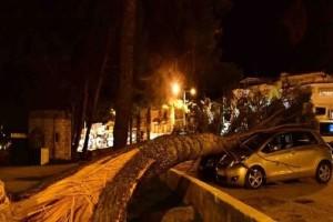 Θυελλώδεις άνεμοι ξερίζωσαν δέντρα στο Ναύπλιο! (Video)