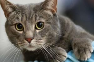 Θα σας εκπλήξει! Δείτε την απίστευτη αντίδραση μιας γάτας όταν το αφεντικό της παθαίνει καρδιακή προσβολή