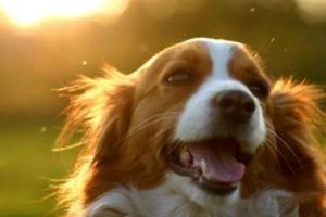 Απόφαση κόλαφος δικαστηρίου σε 46χρονο που σκότωσε σκύλο!