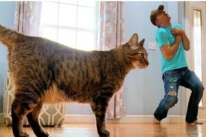 Άντρας κάνει τον πεθαμένο για να δει πως θα αντιδράσει η γάτα του και το αποτέλεσμα είναι ξεκαρδιστικό!