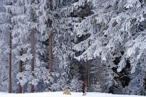 Η φωτογραφία της ημέρας: Μια γυναίκα πάει βόλτα με τον σκύλο της στην παγωμένη Ελβετία