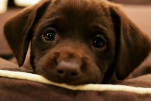 Μόλις απέκτησες σκύλο; Δες πως να διαλέξεις το όνομα που θα βοηθήσει το κουτάβι σου στην απομνημόνευσή του!