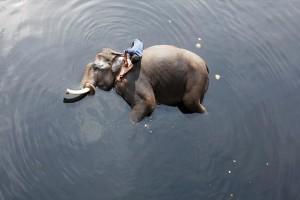 Η φωτογραφία της ημέρας: Ένας άνδρας πλένει τον ελέφαντά του στον ποταμό!