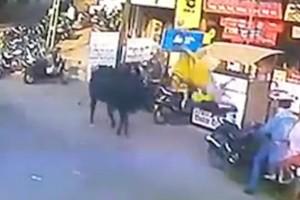 Σοκαριστικό βίντεο: Ταύρος πετάει στον αέρα γυναίκα που περπατά αμέριμνα στην Ινδία!