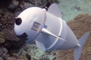 Σόφι, τo ρομποτικό ψάρι- Τόσο αληθινό που...έχει κλέψει τις καρδιές των αληθινών ψαριών