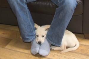 Η γλώσσα των σκύλων και τι σημαίνει η κάθε τους κίνηση