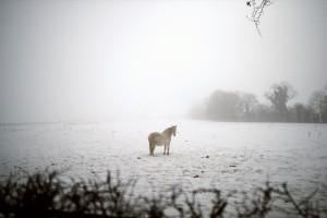 Η φωτογραφία της ημέρας: Ένα άλογο σε χιονισμένο και ομιχλώδες τοπίο!